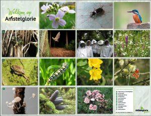 Biodiversiteit op Amstelglorie
