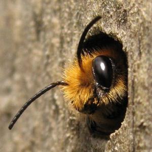 workshop wilde bijen hotels maken
